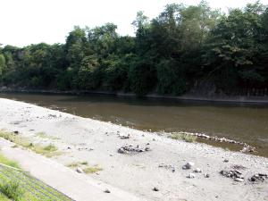 荒川川遊び