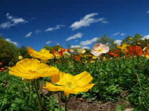 花の回廊の花