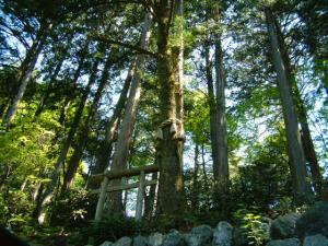 えんむすびの木