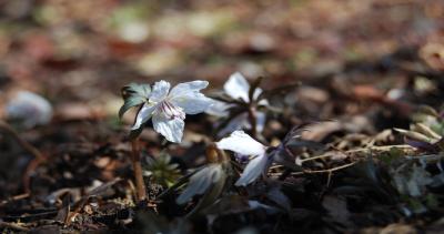 咲きはじめのお花