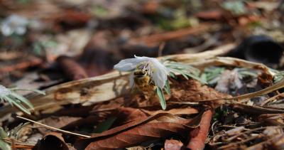 ぶら下がるミツバチ