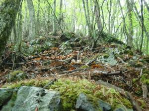 岩茸採りの山道