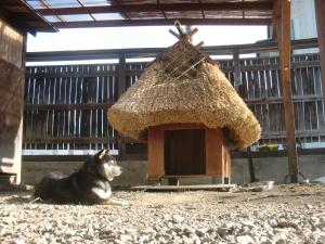 ハチと茅葺屋根