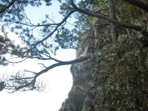 岩茸の岩場