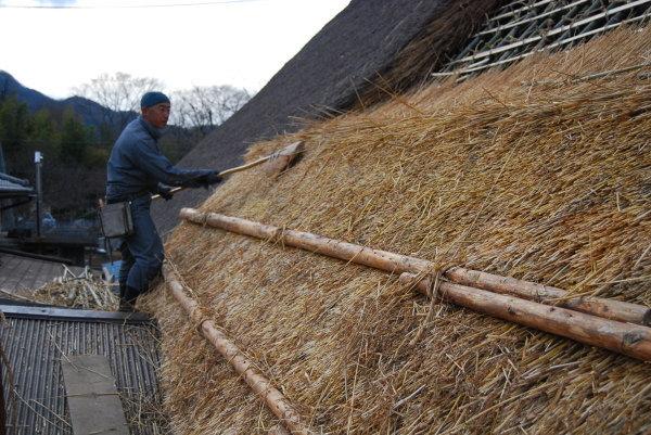 茅葺き屋根に小麦を並べて葺いていく