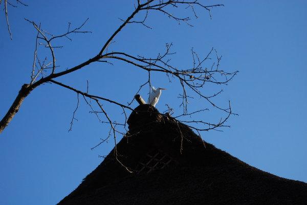 茅葺き屋根の上の神様