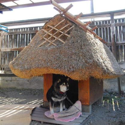 茅葺屋根の犬小屋