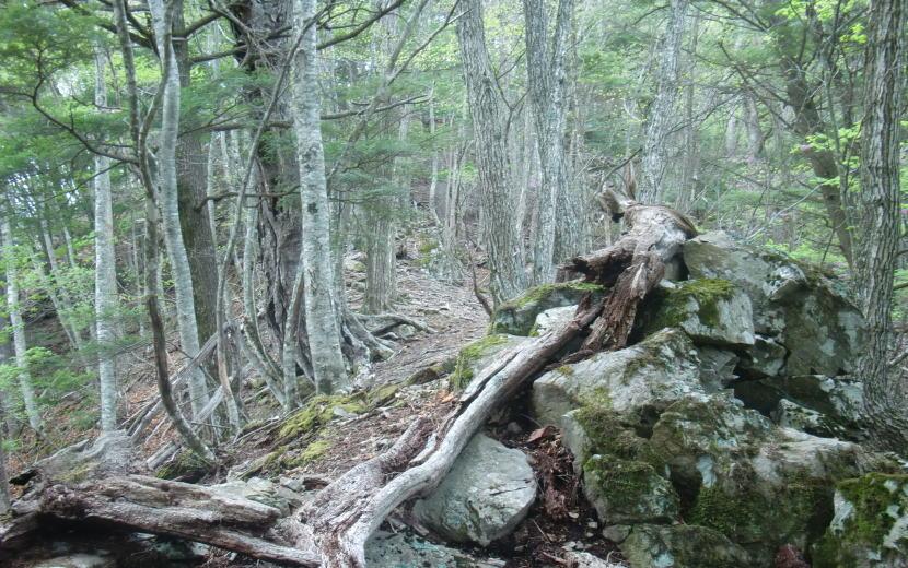 高山帯の尾根線